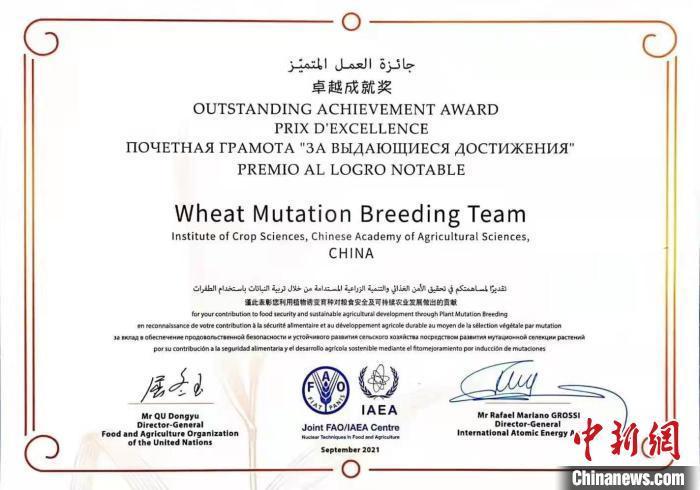 """中国农业科学院""""小麦诱变育种""""研究团队获核技术诱变育种""""卓越成就奖""""。 国家原子能机构 供图"""