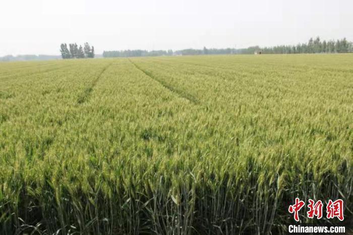 中国科研团队获国际核技术农业应用领域最高奖项