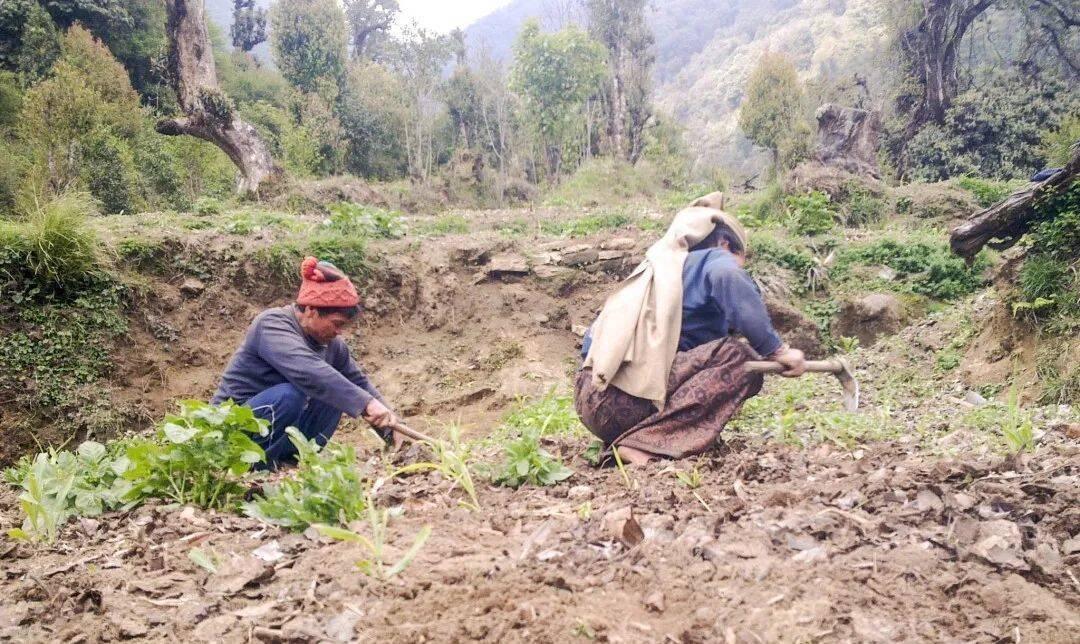 挖土豆的村民,织布的村民