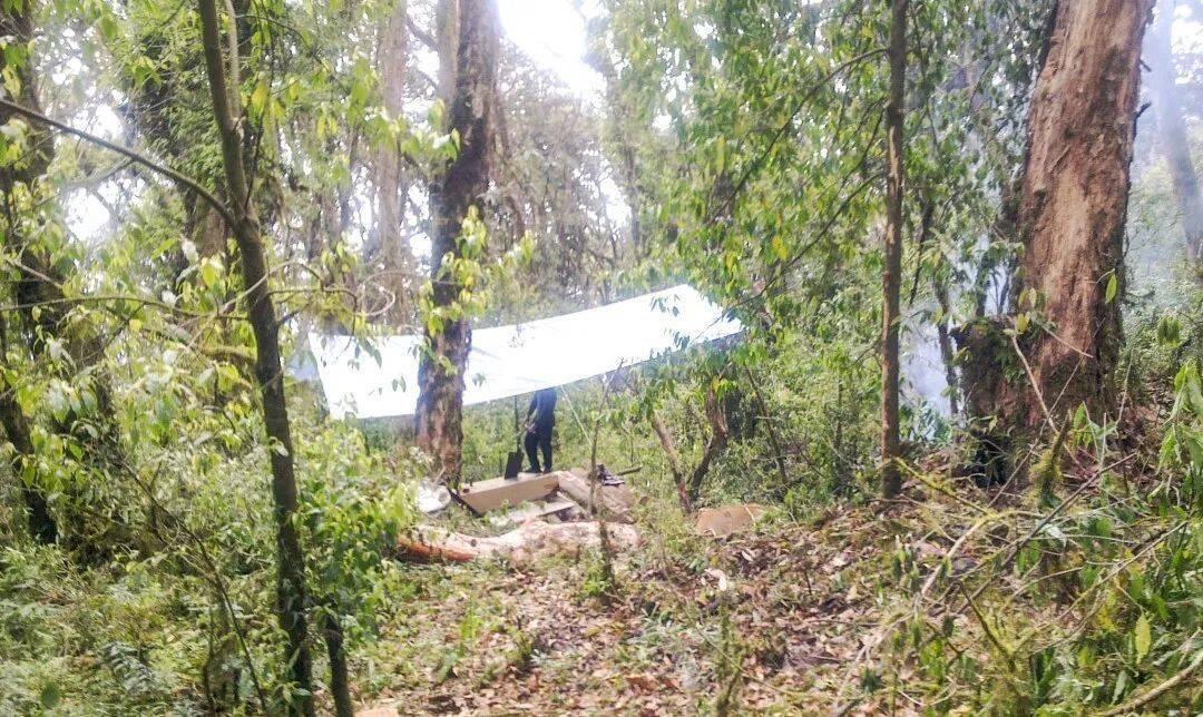 村民在砍伐树木