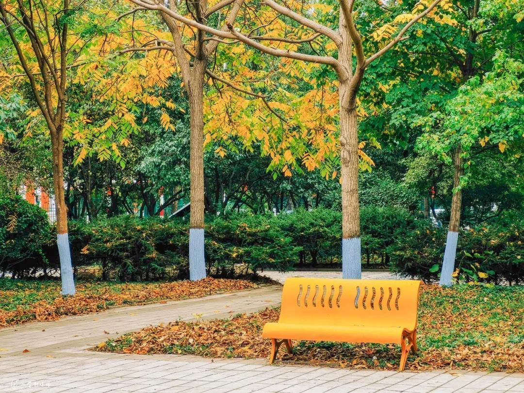 白桦树 推荐拍照地:石园