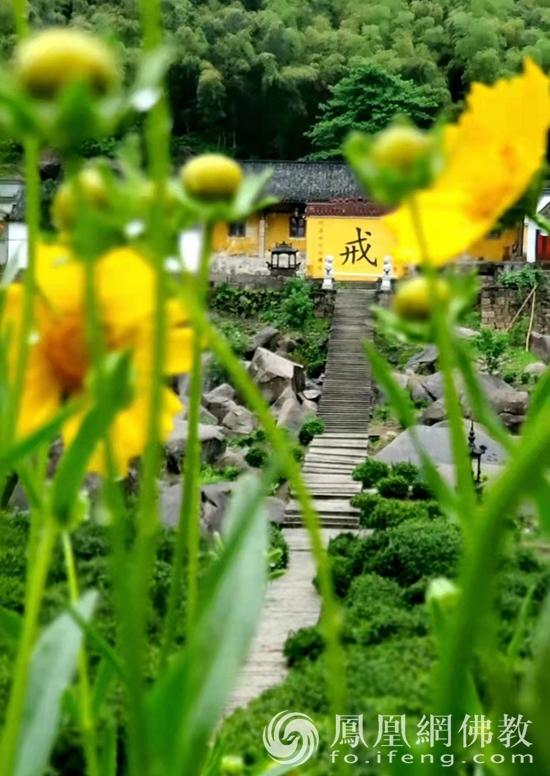 图片来源:凤凰网佛教 摄影:九华山翠峰寺