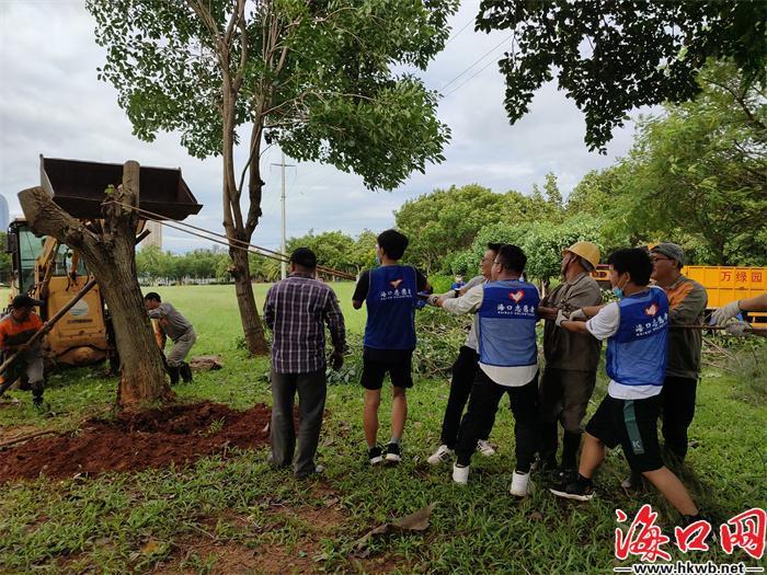 青年突击队帮忙扶起倒下的树木。(团市委供图)