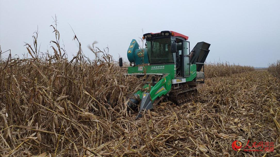 大名县农业部门协调履带式玉米收获机帮助农民秋收。 人民网 杨文娟摄