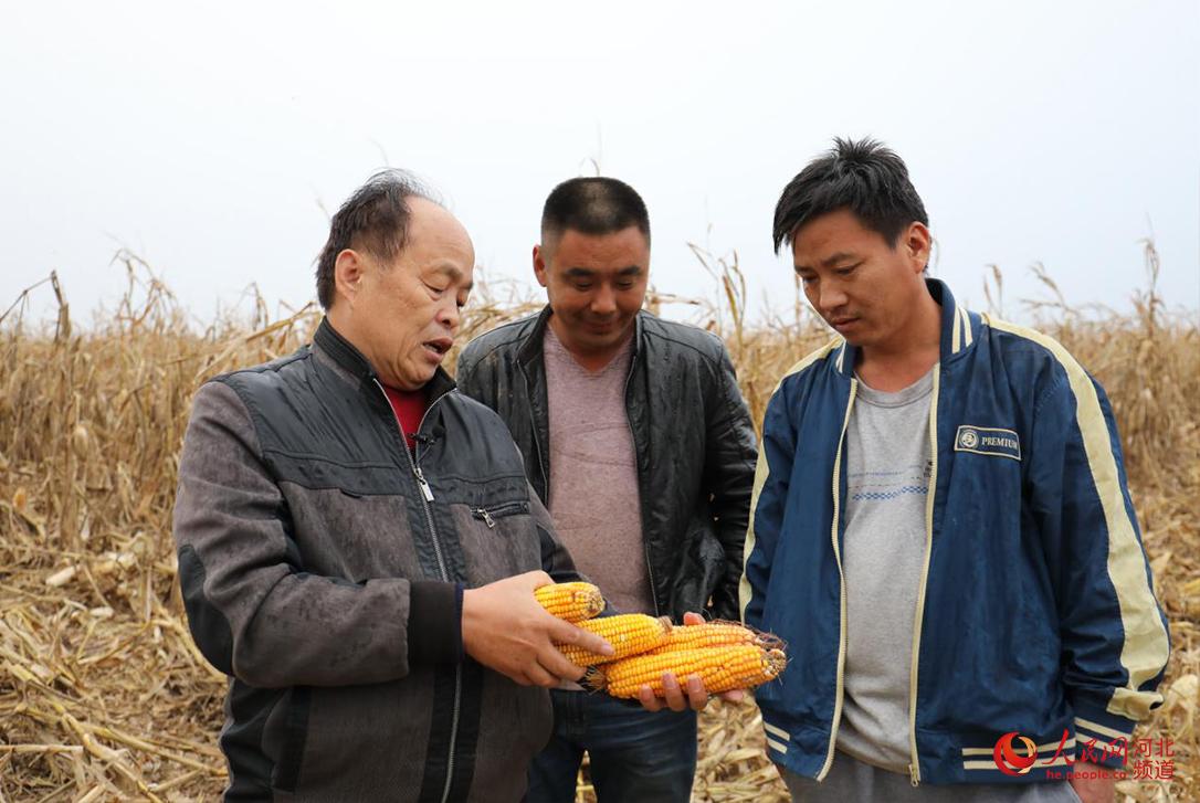 大名县农技专家指导农民收获玉米后如何储存。 人民网 朱鹏涛摄