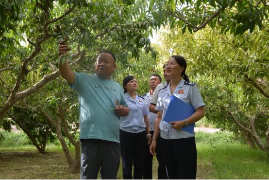 税务干部入户走访了解农民合作社紫胭桃种植情况