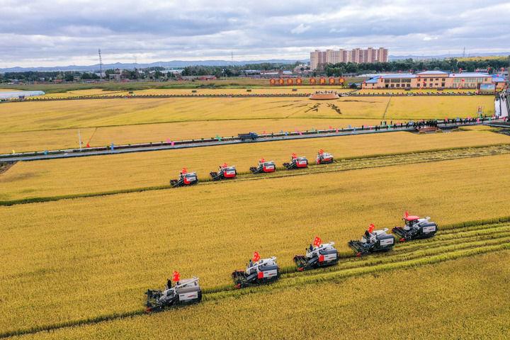 9月23日,在吉林省长春市九台区龙嘉街道红光村,农民驾驶农机进行水稻收割集中作业展示(无人机照片)。新华社记者 张楠 摄