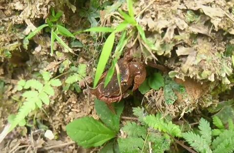 """草丛里的迷途""""小蟹"""""""