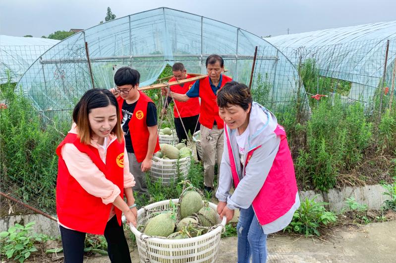 湖州市长兴县组建党群创业互助会,组织党员志愿者帮助农户采摘。 湖州市委宣传部 供图