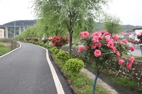 温盘村沿河游步道