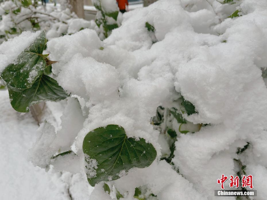 """甘肃多地深秋现""""冬景"""" 积雪一小时达寸许"""