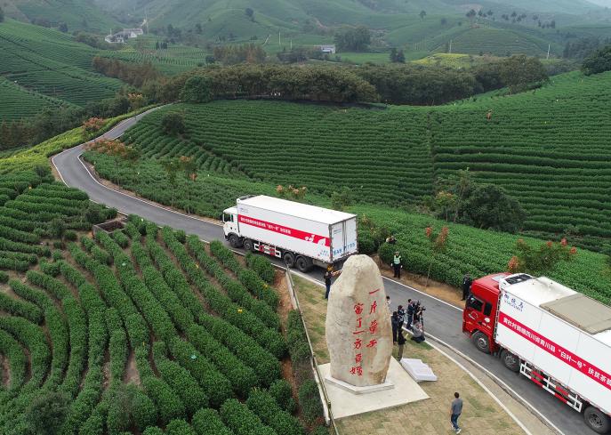 2018年10月18日,黄杜村第一批茶苗300多万株启程运往贵州省普安县、沿河县,以及四川省青川县。 湖州市委宣传部 供图