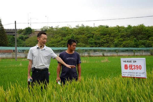 李概明(左)在田间了解稻谷长势情况。图片来源:湖南文明网