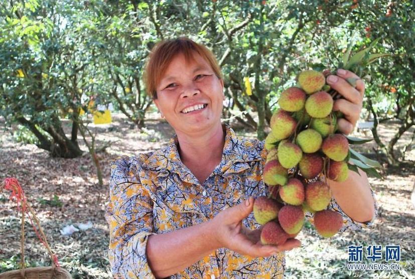 广东茂名高州市根子镇柏桥贡园内售卖荔枝的果农。新华网发