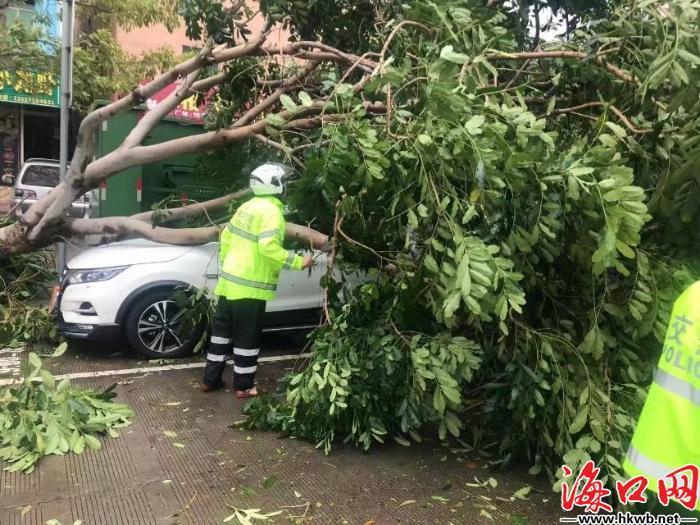 交警清理倒伏树木。(海口公安交警供图)