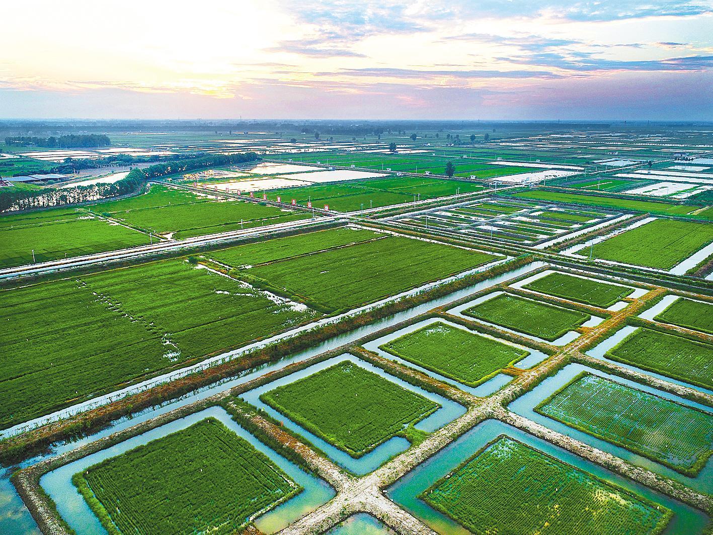 虾稻共作标准化生态种养基地。