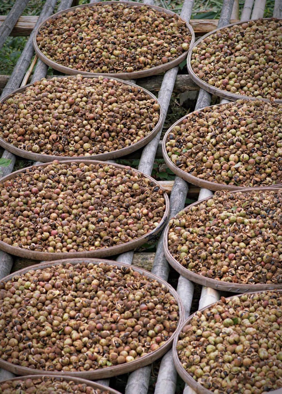 皖南故乡的山茶油,民族的味道为何能打动世界?凤凰网凰家尚品